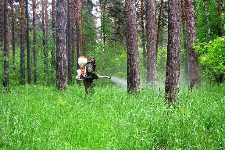 Обработка от клещей лесных массивов в Улан-Удэ